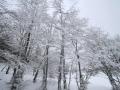 Neige sur les arbres @ Horizons
